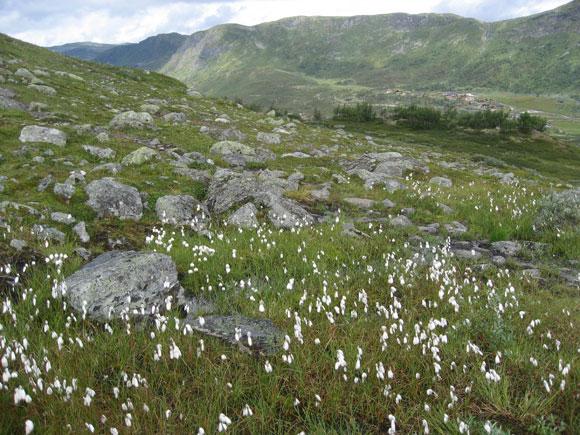 Norwegen: Blumenwiese bei den Sulebu Schutzhütten