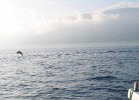 Delfine Bali Indonesien