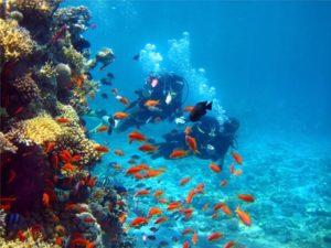 Portugal bietet Tauchfreunden eine tolle Unterwasserwelt