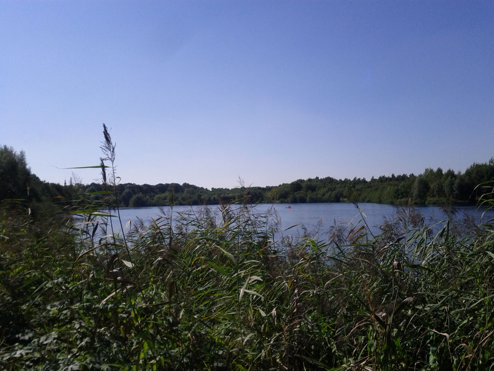 Waldsee Lauer