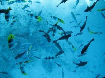 Fischschwarm Bora Bora